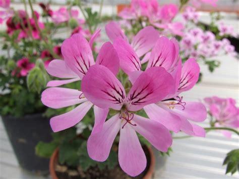 antico fiore l antico fiore luoghi italianbotanicaltrips