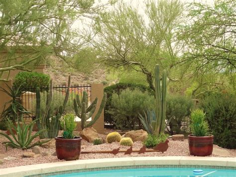 backyard cactus garden cactus garden ideas landscape southwestern with outdoor