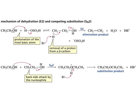 hydration vs dehydration reaction dehydration synthesis and hydrolysis compare pictures to