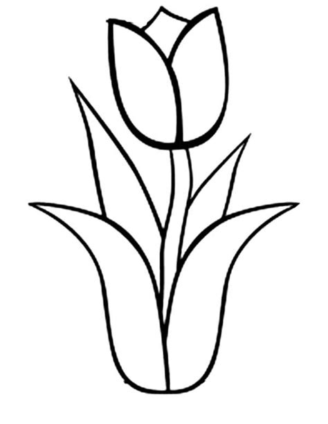 tulip outline coloring pages