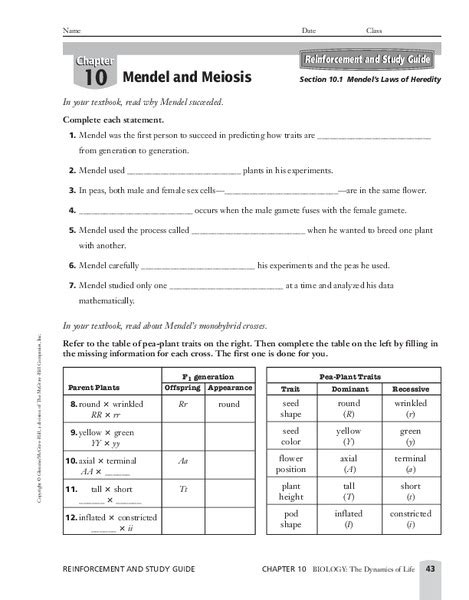 Chapter 10 Mendel And Meiosis Worksheet Answers by Mendel And Meiosis Worksheet Answers Worksheets