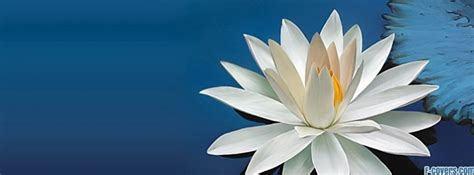lotus flower cover photo flowers lotus cover timeline photo banner for fb