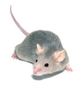 pet supplies aquarium how to keep mice as pets