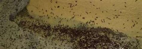parassiti letto albergo choc infestato dalle cimici dei letti parassiti