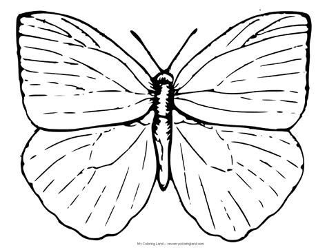 coloring page caterpillar to butterfly butterfly my coloring land