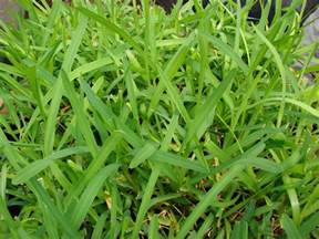 the best grass types for acworth ga lawns lawnstarter