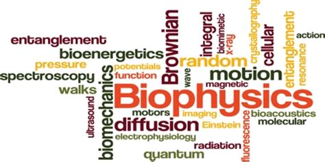 theoretical molecular biophysics biological and physics biomedical engineering books biophysics assignment point