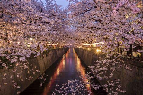 culture  tokyo japan