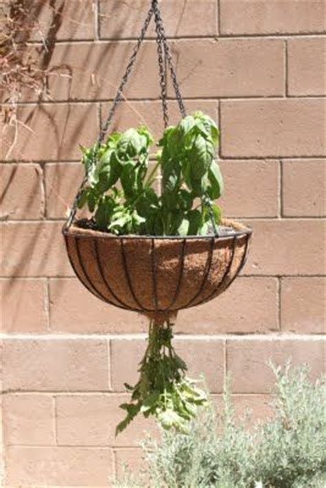 Diy Hanging Tomato Planter by The 25 Best Tomato Plants Ideas On Growing Tomato Plants Tomato Plant Food And