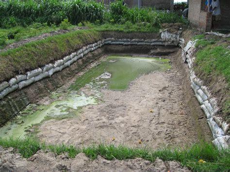 Pakan Ikan Hias Belida kolam tanah untuk ikan lele zona ik n