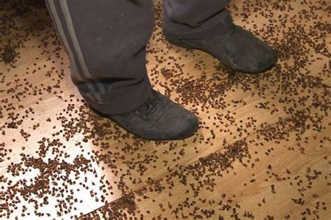 how bad is my bed bug infestation a letter from hotel management about ladybug love rebrn com