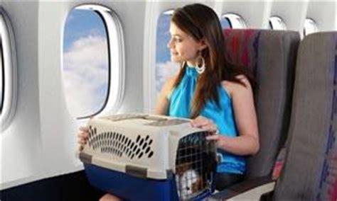 alitalia trasporto animali in cabina animali domestici le regole per viaggiare con loro best5 it