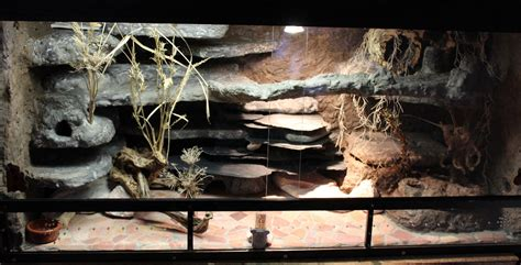 das terrarium leopardgecko farm