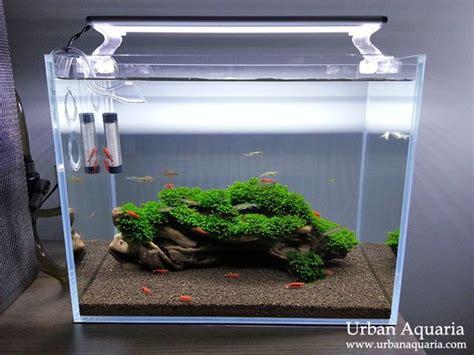 best nano fish tank 25 best ideas about nano aquarium on betta