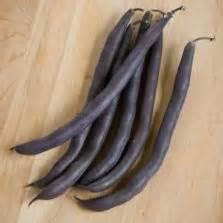 Jual Bibit Zukini benih zukini courgette zucchini