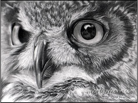 10 clever owl drawings for inspiration hative