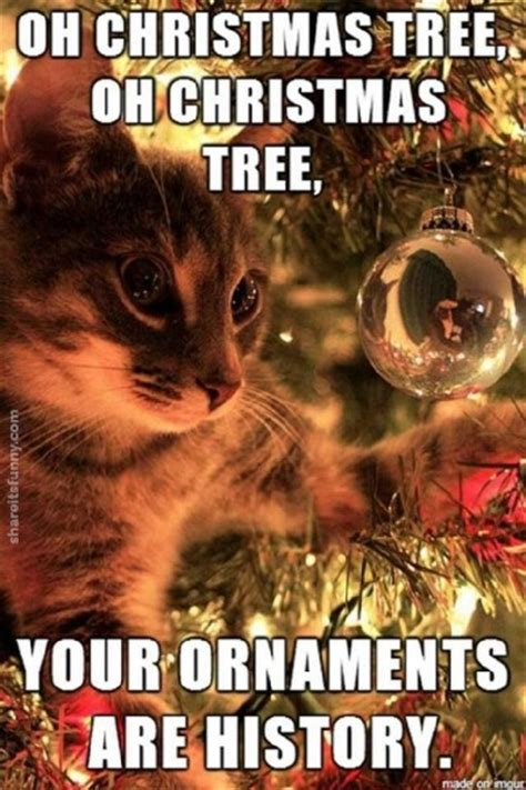 christmas cat memes cats rhyme its