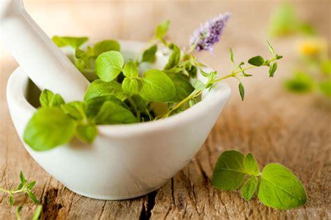 plants  health information  flowersorguk