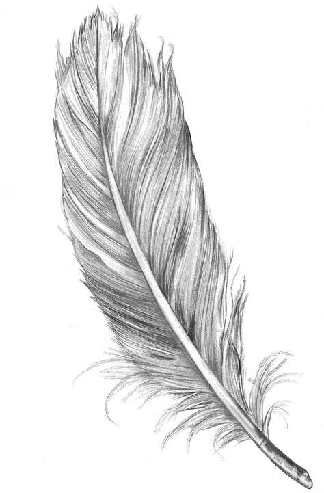 drawn feather unique pencil and in color drawn feather