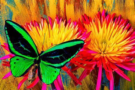 imagenes abstractas bellas cuadros modernos pinturas y dibujos mariposas y flores
