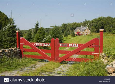 christmas tree farm little compton rhode island stock