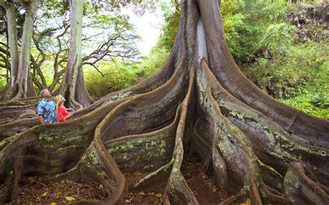 Allerton Gardens by Allerton Garden National Tropical Botanical Garden