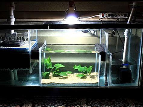 design aquarium filter reef aquarium sump design quotes