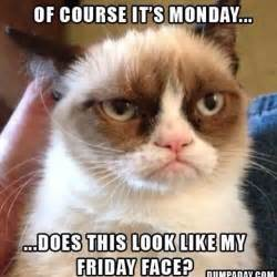 Funny Monday Morning Memes - best 25 monday morning humor ideas on pinterest
