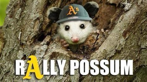 Possum Memes - oakland is on the verge of a monumentally epic collapse