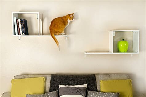 cat wall furniture modern pet furniture accessories for design lovers art