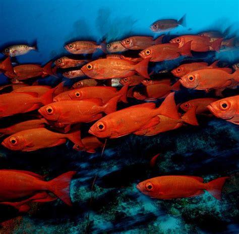warum haben fische schuppen meeresbiologie warum auch fische das weltklima