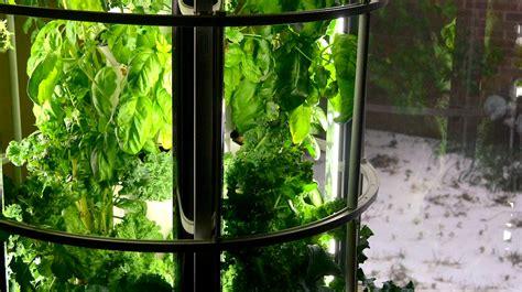 indoor gardening  winter    spring