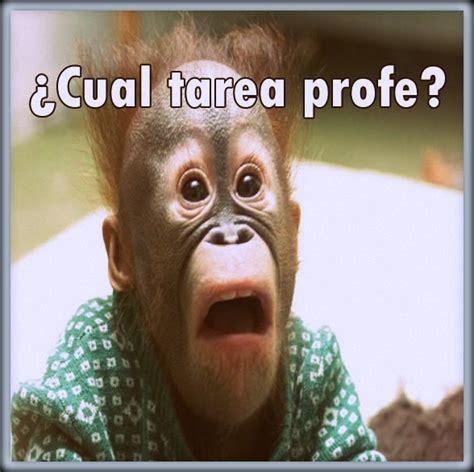imagenes figurativas de caras caras graciosas de animales imagenes divertidas con frases