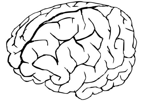 coloring page brain free coloring pages of the brain