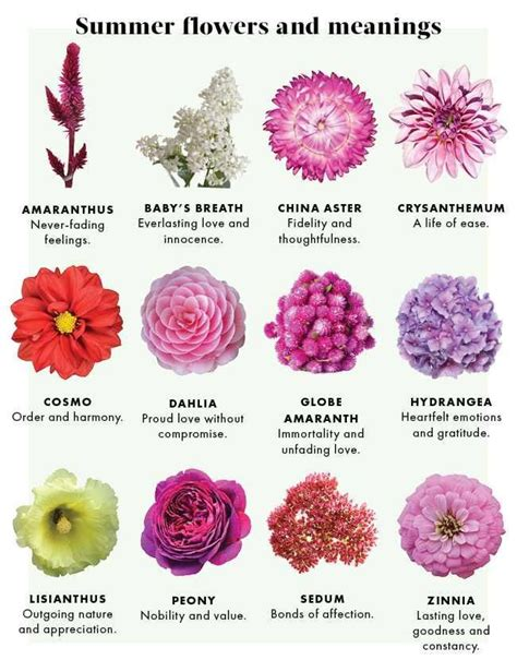 Types Of Flowers And Their Meanings by 9 Best Images About Floral Personality Meaning On