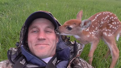 saves deer saves baby deer who then wants to stay with new screener