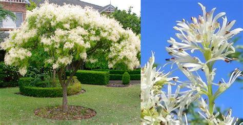 fiori particolari da giardino alberi particolari da giardino