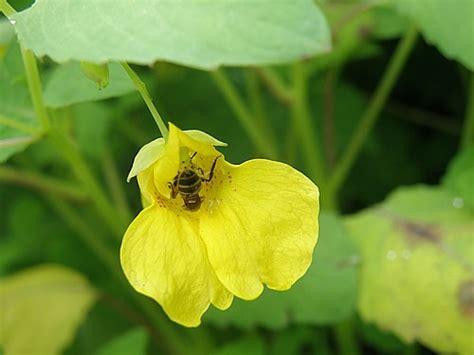 doorschijnende bloemen natuurfragmenten een tochtje langs kleine