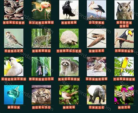 guess animal  level   answers  pics  word