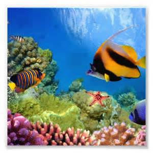 Colorful Coral & Tropical Fish Photo Print   Zazzle