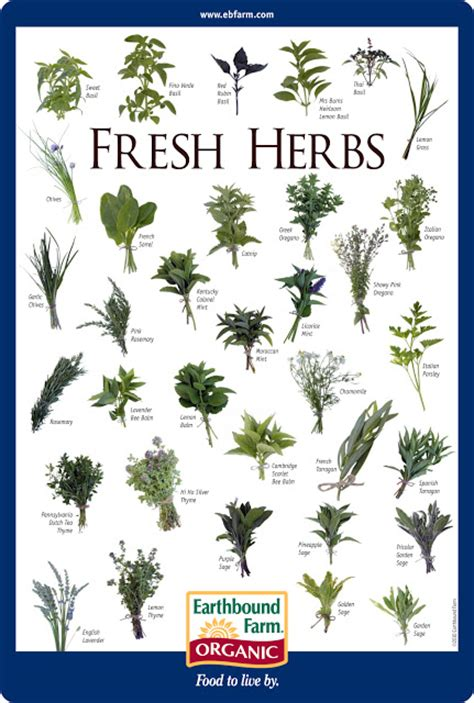 herbs chart herb identification chart welcome to all things quot herbal quot