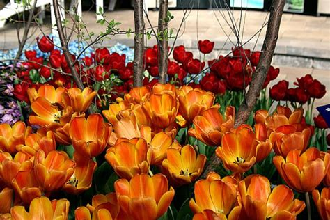 Indy Flower And Patio Show by Indiana Flower And Patio Show Mar 14 22 2015 Around Indy