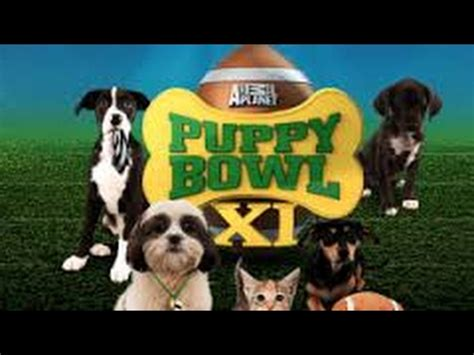 what time is puppy bowl 2017 what time is puppy bowl 2017 puppy bowl 2016 bowl