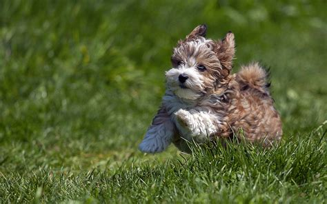 really puppy 50 dogs wallpapers puppy desktop wallpapers hd wallpapers images