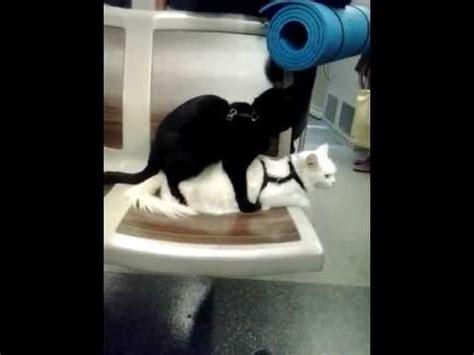 ils font l amour dans le lit chats qui font l amour dans le m 233 tro xd