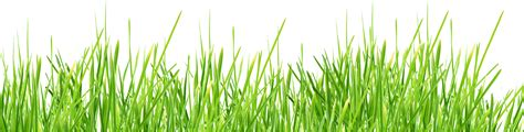 green grass clipart grass clipart transparent background pencil and in color