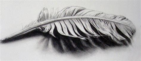 tattoo feather sketch feather tattoo sketch tat board pinterest
