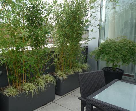 Bamboo Patio by Bamboo Containers For A Patio Screen And