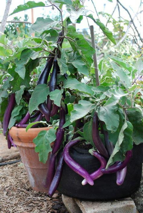 Gardening Eggplant Essbare Bl 252 Ten Und Pflanzen In Der Gartengestaltung 9 Tipps