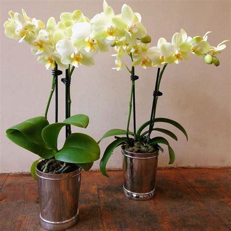 vasi per piante vasi per orchidee vasi per piante tipologie di vaso
